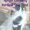best-dog-food