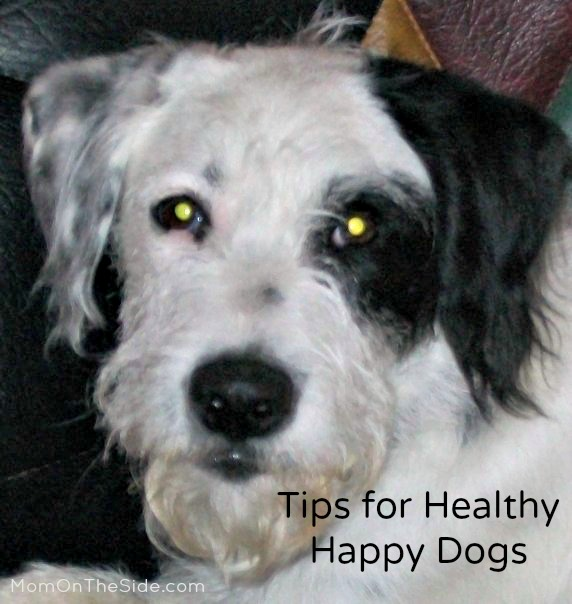 3 Tips for Happy Healthy Dogs