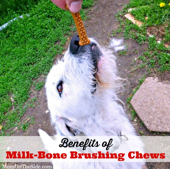 Benefits of Milk-Bone Brushing Chews