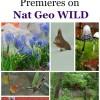 secret-garden-on-nat-geo-wild