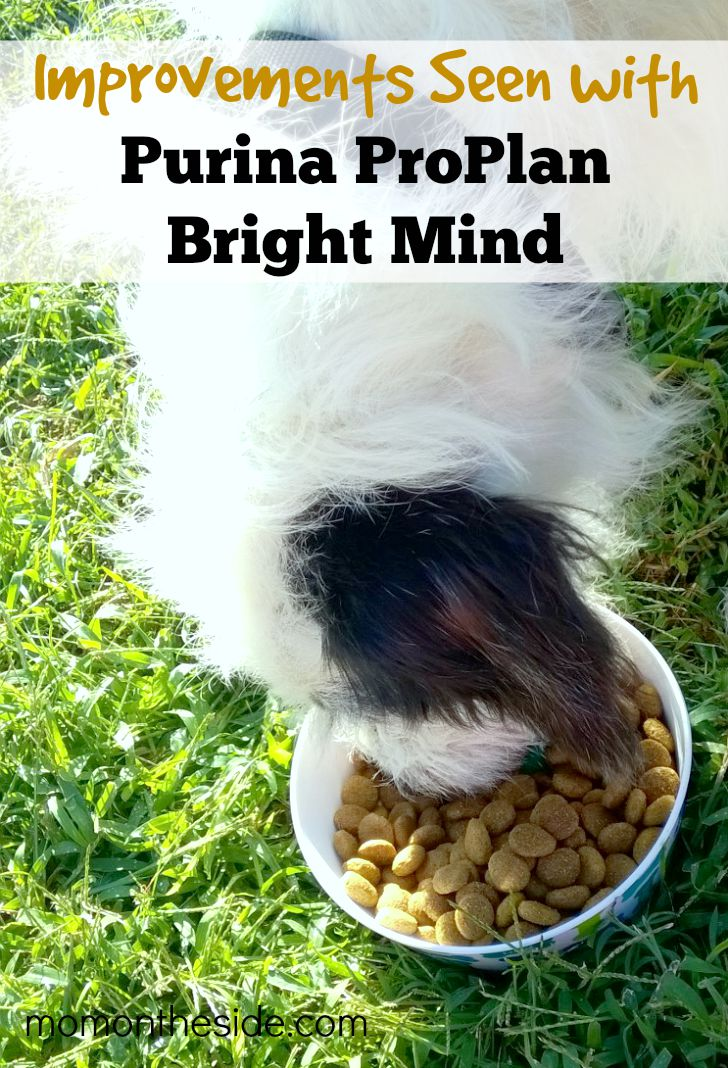 Improvements Seen with Purina ProPlan Bright Mind