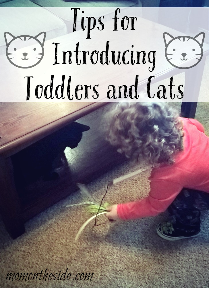 Tips for Introducing Toddlers and Cats