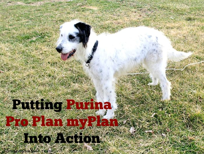 Putting Purina Pro Plan myPlan Into Action #BrightMind