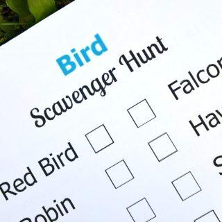 Bird Scavenger Hunt + A Stork's Journey Giveaway