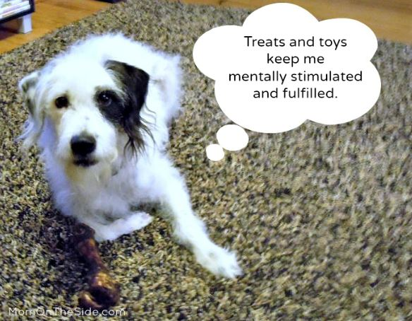 Toys To Keep Dogs Stimulated