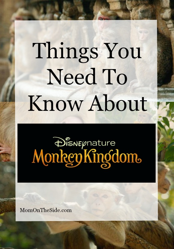 things-you-need-to-know-about-disneynature-monkey-kingdom