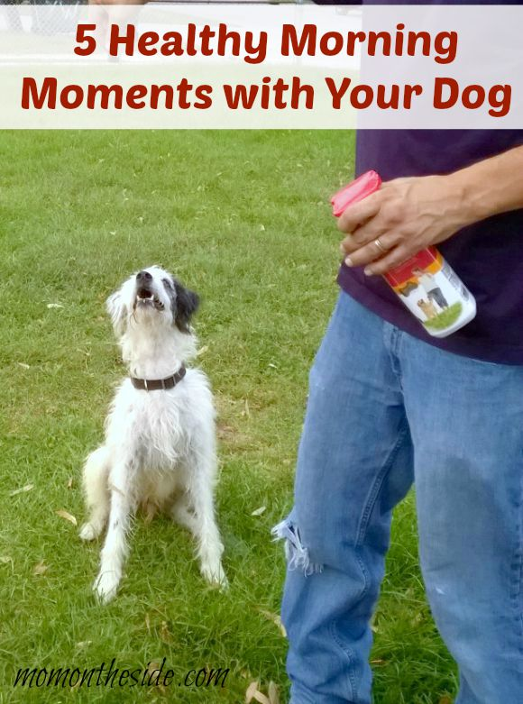 5 Healthy Morning Moments with Your Dog