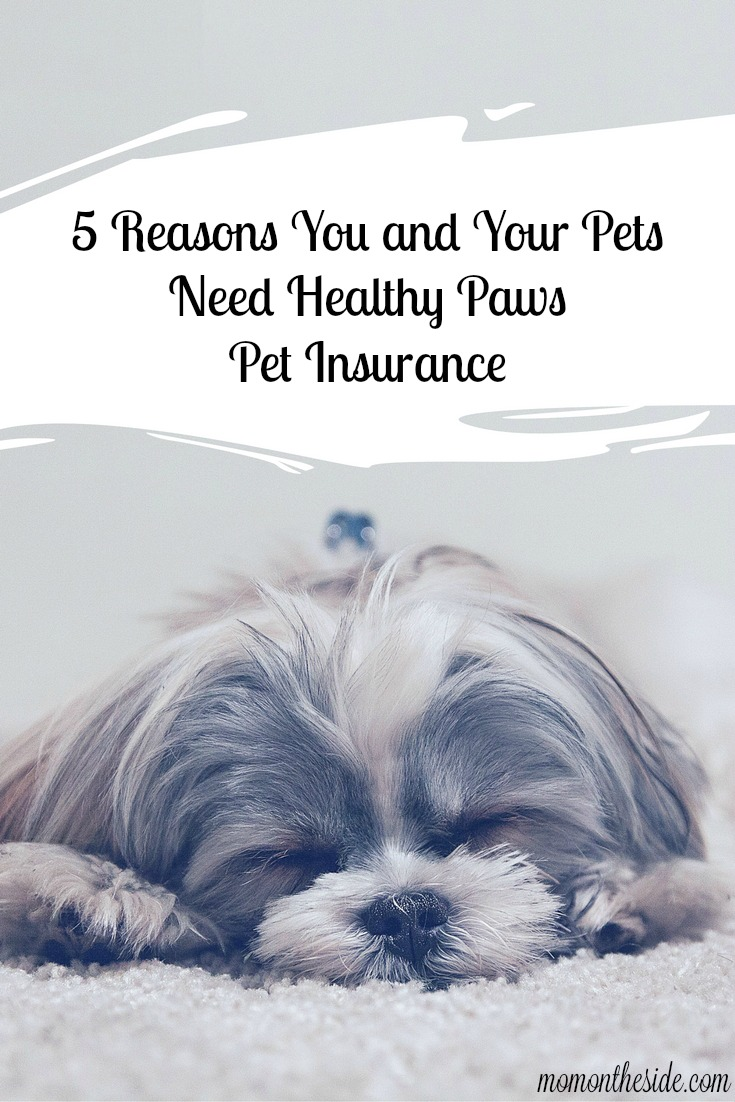5 Reasons You and Your Pets Need Healthy Paws Pet Insurance