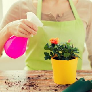 11 Amazing Uses for Dawn Dish Soap