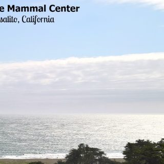 The Marine Mammal Center is Making a Difference